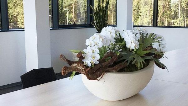 Plastične tegle za cvijeće su idealne za uzgajanje u stanu